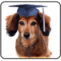 Dog Training Guide - Updated