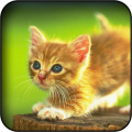 Cute Kitties Wallpapers