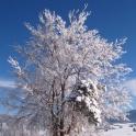 Falling Snow Winter Desktop