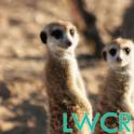 Meerkat Live Wallpaper