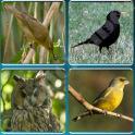 Bird Guide + Quiz Game