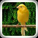 Singing Canary Master