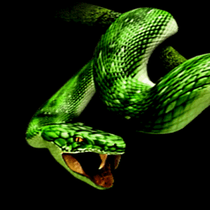 Snake Attack Live Wallpaper - Android Informer. If you ...