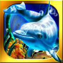 Dolphin Casino - Fortune Pearl