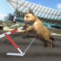 Crazy Cat Racing