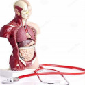 All Anatomy Mnemonic