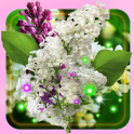 Lilac Purple n White live wallpaper