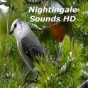 Nightingale Bird Sounds HD