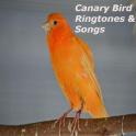 Canary Bird Ringtones & Songs