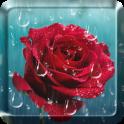 Rose Raindrop Live Wallpaper
