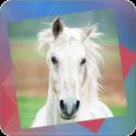Déjà Vu - Horses