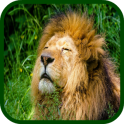 Zoo Animals Fun Games For Kids
