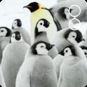 cute penguin live wallpaper