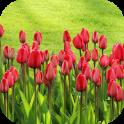 TulipsBG