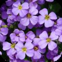 BloomBG Flowers Bloom Wallpaper. Submit Flowers