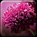 Live Flower Wallpaper