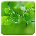 Live Fresh Leaves Wallpaper