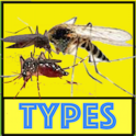 Mosquito Type and Diseases