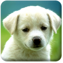 Free HD Puppies Wallpaper