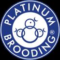 Platinum Brooding