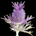 Flora of Texas