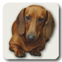 Dachshund sad song DONATE