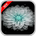 Galaxy Flowers Live Wallpapers