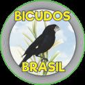 BICUDOS BRASIL