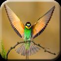 HD Bird Wallpaper