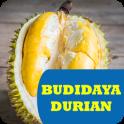 Budidaya Tanaman Durian