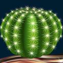 Cactus Photo Collage