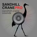 Sandhill Crane Calls UK