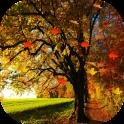 Autumn HD Live Wallpaper Pro