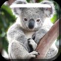 Cute Koala Live Wallpaper