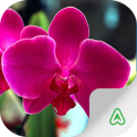 Orchids Guide