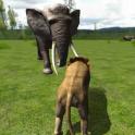 Недвижимость Lion Simulator 3D