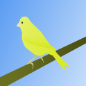 Canary Bird Sound