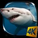 Requin 4K Fond d'écran animé