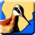 Rare Bird Alert SouthernAfrica
