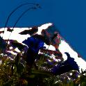 The colorful Alpine Flowersie