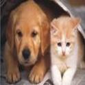 Neighbor (0/1 or Dog/Cat) Game