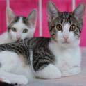 Animal Babies & Homes
