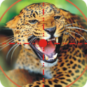 Wild Animal Hunting Game