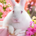easter bunny live wallpapers