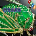 Cicada Ideas