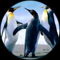 Penguin Sounds
