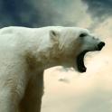 polar bear wallpaper live