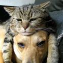 Lwp 猫と犬
