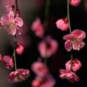 Papel De Parede Flor