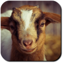 Goat Wallpapers